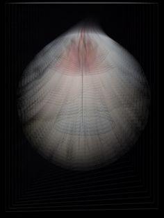 Lotus in Light 1 - Leigh Ellen Williams (leighwatessential@ live.com)