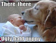Poor ugly, bald puppy!
