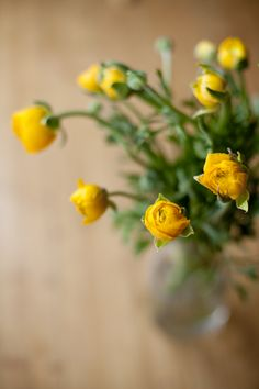 yellow ranunculus. :)  -photo by simone anne