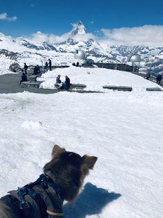 Zermatt, Schweiz 🇨🇭- Chihuahua auf Reisen Zermatt, Mountains, Nature, Travel, Switzerland, World, Viajes, Naturaleza, Destinations