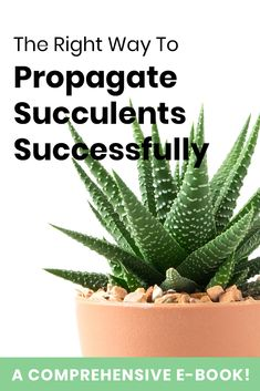 With this all-inclusive e-book on propagation, you'll get to learn:  What propagation really is Resources, materials and tools needed to successfully propagate your plants Factors to consider when choosing parts to propagate 5 well-explained methods of propagation And so much more… Your propagates never have to die again! This e-book offers you everything you need to know to propagate your succulents like a pro. You get pure value slammed on the pages. No fluff!