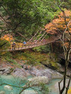Vine bridge in Iya Valley, Shikoku, Japan (by razzledazzleinpictures)