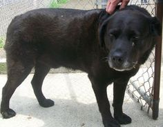Tuesday's Tails - Regally Yours  Poor Regal was left behind by his owners.  He just wants somebody to love him.  Could you be that person?