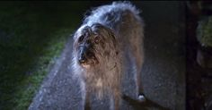 Brave Dog Flees Abusive Family To Find Love In This Touching Ad via LittleThings.com