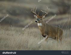 Whitetail Deer Photos, by Eric Dresser Deer Stand Windows, Tower Deer Stands, Hunting Wallpaper, Deer Wallpaper, Deer Photos, Deer Pictures, Animal Pictures, Quail Hunting, Deer