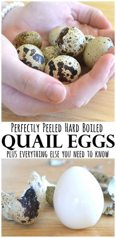 All about Quail Eggs | How to hard boil quail eggs, peel & crack quail eggs and other quail egg stuff you need to know | www.craftycookingmama.com