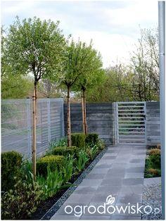 W moim ogrodzie, gdzie czas leniwy... - strona 915 - Forum ogrodnicze - Ogrodowisko
