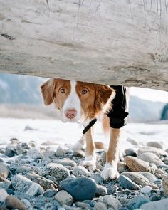 dog hacks,dog tips,dog learning,dog care,dog stuff Cute Funny Animals, Cute Baby Animals, Animals And Pets, Cute Dogs And Puppies, Pet Dogs, Doggies, Puppies Tips, Beautiful Dogs, Animals Beautiful