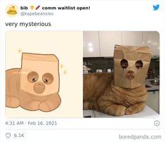 Cute Animal Memes, Funny Animal Photos, Cute Funny Animals, Cute Cats, Funny Cats, Cute Animal Drawings, Cute Drawings, Animals And Pets, Baby Animals
