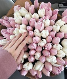Bringing some stunning Tulips to your screens Fairies! #blooms #flowers #tulips…