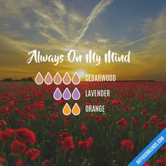 Always On My Mind - Essential Oil Diffuser Blend