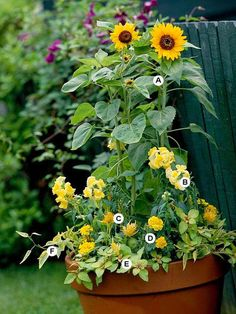 Great Containers for Gardening