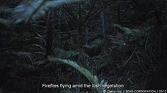 Canon Full-Frame Sensor Captures Firefiles Flying in Darkness « NEW CAMERA