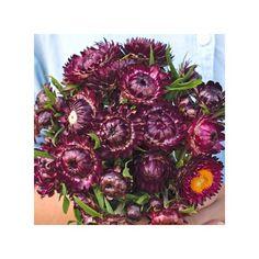Dragon Fire Evighedsblomster. Perfekte til tørrede blomster Fire Dragon, Wreaths, Halloween, Decor, Dekoration, Door Wreaths, Decorating, Deco Mesh Wreaths, Halloween Stuff