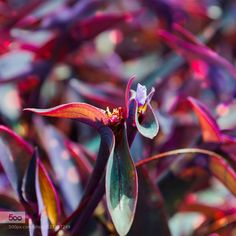 COLOR - Pinned by Mak Khalaf Nature  by frank106