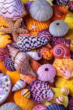 Shells Photograph - Ocean treasures by Garry Gay Stone Wallpaper, Nature Wallpaper, Deco Marine, Seashell Crafts, Shell Art, Colorful Wallpaper, Ocean Life, Sea Creatures, Belle Photo