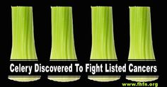 Celery Discovered To Fight Listed Cancers