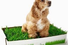 The best way to train a dog to use a litter box is one thing that you need to have asked if you have a dog. Puppies are special pet that can be negligence our family. When we possess a dog we want your dog to show great behavior for example not peeing anywhere.