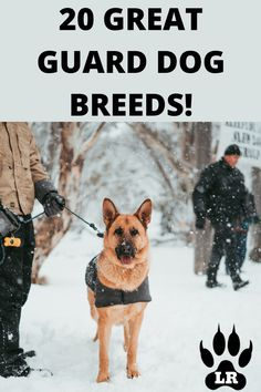 The best guard dog breeds are those that stop at nothing to protect you, your family, and your possessions. When it comes down to which breed is best! #GuardDogs #Breeds #Best #Scary #Tibetan Mastiff #Training #Family #GermanShepherd #GreatPyrenees #Big