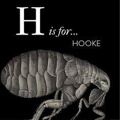 HOOKE: View of a flea from Robert Hooke's Micrographia, 1665. The first work in English to publish observations made under the microscope | Image credit: Bodleian Libraries, University of Oxford