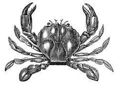 *The Graphics Fairy LLC*: Vintage Clip Art - 3 Fine Crabs & Seahorse Printable