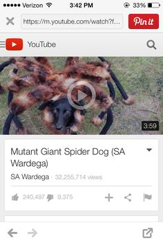 The Daily Treat A Reason to Dress Your Dog as a Mutant Spider for Halloween | Pinterest | Spider costume Spider and Dog  sc 1 st  Pinterest & The Daily Treat: A Reason to Dress Your Dog as a Mutant Spider for ...