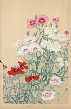 Dianthus from Chigusa Soun Flowers of Japan Woodblock Prints 1900