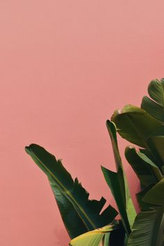Pin od kasia włodarczyk na wallpapers обои фоны, обои для iphone i фоновые Computer Wallpaper, Iphone Wallpaper, Phone Backgrounds, Wallpaper Backgrounds, Plant Wallpaper, Tropical Wallpaper, Light Texture, Leaf Art, Pink Aesthetic