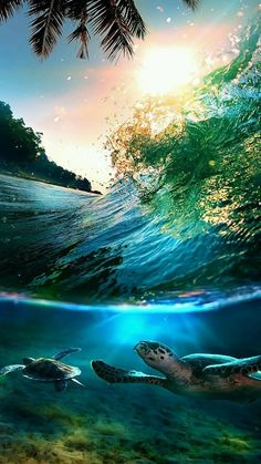 Essentail Colors Of Middle Earth Wallpaper Landscape Nature Wallpapers) – Beautiful Wallpapers Ocean Life, Nature Pictures, Family Pictures, Amazing Nature, Belle Photo, Under The Sea, Pretty Pictures, Beautiful Landscapes, Beautiful World