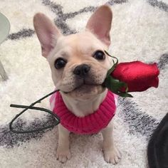 Silly Dogs, Cute Baby Dogs, Cute Puppies, Dogs And Puppies, Doggies, Felt Animals, Animals And Pets, Baby Animals, Cute Animals