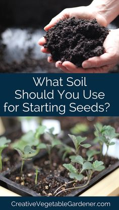 The best seed starting mix for growing plants at home.