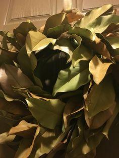 I created a lovely magnolia leaf wreath for my front door! Magnolia Wreath, Magnolia Leaves, Diy Projects, Wreaths, Plants, Door Wreaths, Deco Mesh Wreaths, Plant, Handmade Crafts