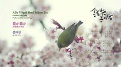 동요: 봄바람, 霞か雲か, Alle Vögel Sind Schon Da
