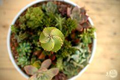 Jardim do Cacto Espiral | os mini mundos