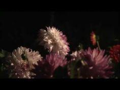Night Illuminations at The Butchart Gardens