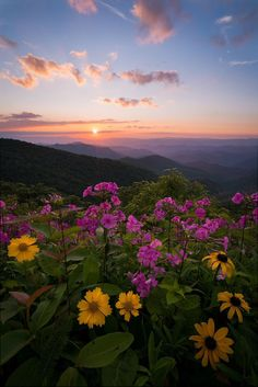 Blue Ridge Parkway, photo by Brian Anderson Landscape Photography, Nature Photography, Beautiful Places, Beautiful Pictures, Beautiful Scenery, Nature Aesthetic, Blue Ridge Parkway, Prado, Nature Photos