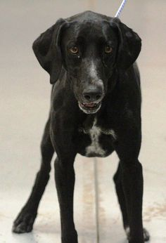 RESCUED>NAME: Avon  ANIMAL ID: 34740132 BREED: Retriever mix  SEX: female  EST. AGE: 2 yr  Est Weight: 44 lbs  Health: Heartworm neg  Temperament: dog friendly, people friendly  ADDITIONAL INFO: RESCUE PULL FEE: $35  Intake date: 2/27  Available: 3/5