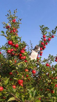 Cat on an apple tree.