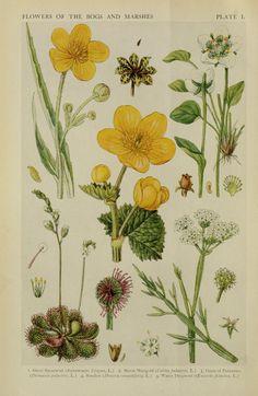 A new British flora; British wild flowers in th...