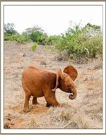 Malima (Photo copyright of DSWT)