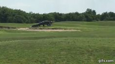 Unusually large alligator seen roaming a golf course in Florida