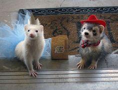 ferret costumes