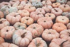 The Great Pumpkin :: Burts Pumpkin Farm