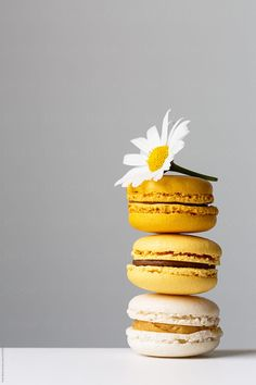 Summer macarons by Ruth Black for Stocksy United Hintergrund Macaron Wallpaper, Food Wallpaper, Iphone Wallpaper, Macaron Cookies, Mellow Yellow, Aesthetic Wallpapers, Cute Wallpapers, Food Styling, Food Art