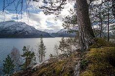 Baum, Steinbutt, Berg, Landschaft