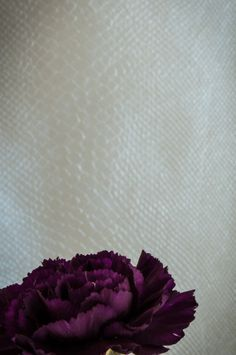 Purple Carnation and Faux Snakeskin: Color Study Photograph No. 7