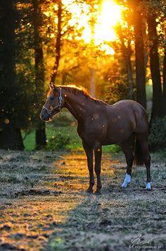Google+ Horse