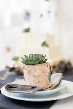 Succulent wedding guest gift - My wedding ideas