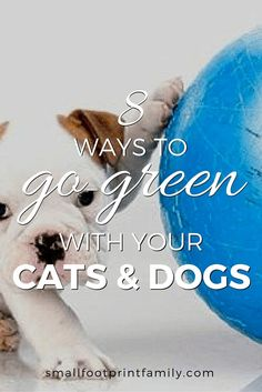 With around one billion pet dogs and cats in the world, Rover and Mittens have a massive effect on the health and sustainability of our environment. So what can be done to make our pets more planet-friendly? Here are 8 ways to go green with your pet. Pet Dogs, Dog Cat, Green Living Tips, Healthy Pets, Sustainable Living, Sustainable Environment, Diy Stuffed Animals, Go Green, Pet Care