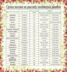 Рассада / цветы:, болезни огурцов: Группа Клумбы и цветники